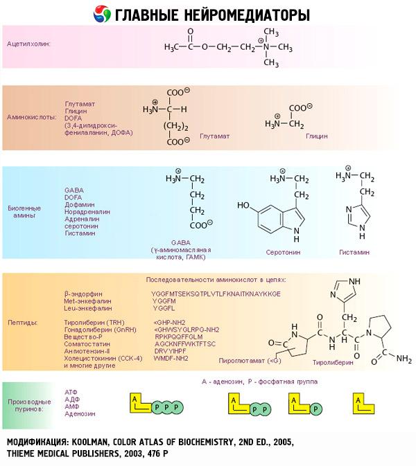Aprender cómo las recetas de la dieta del metabolismo acelerado